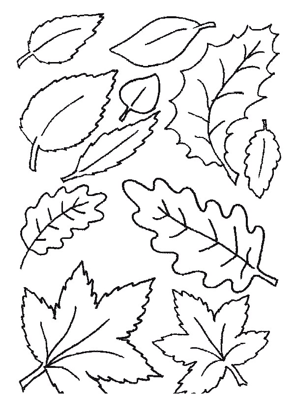 natura/foglie/foglie15.jpg