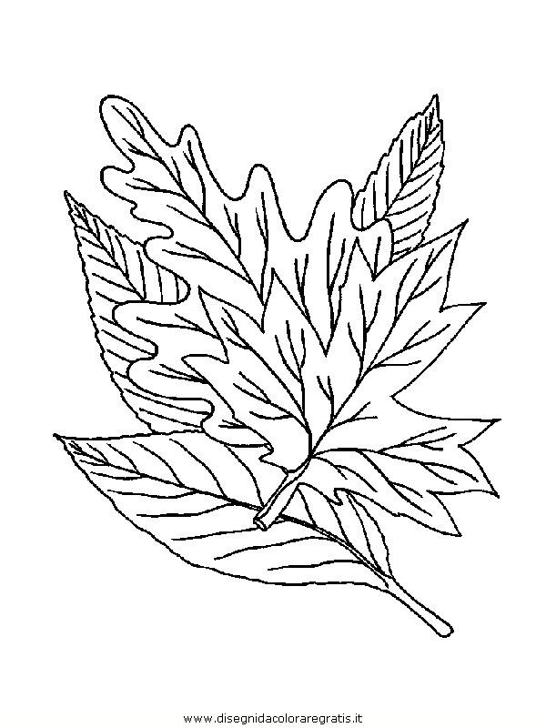 natura/foglie/foglie16.JPG