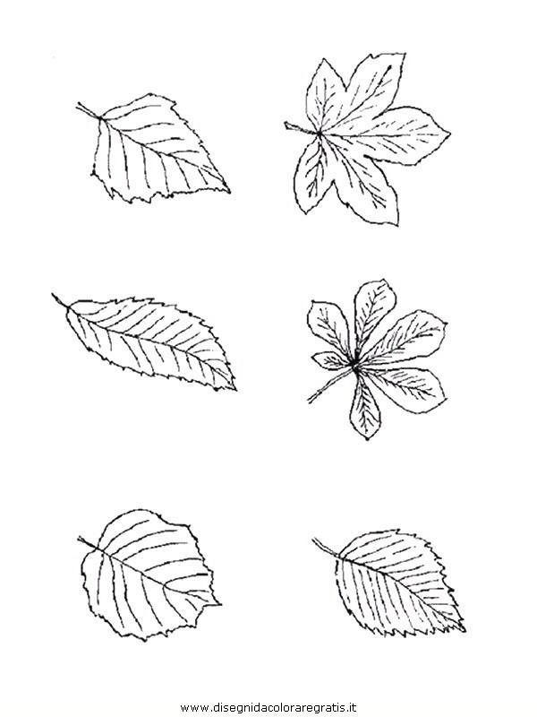 natura/foglie/foglie17.JPG