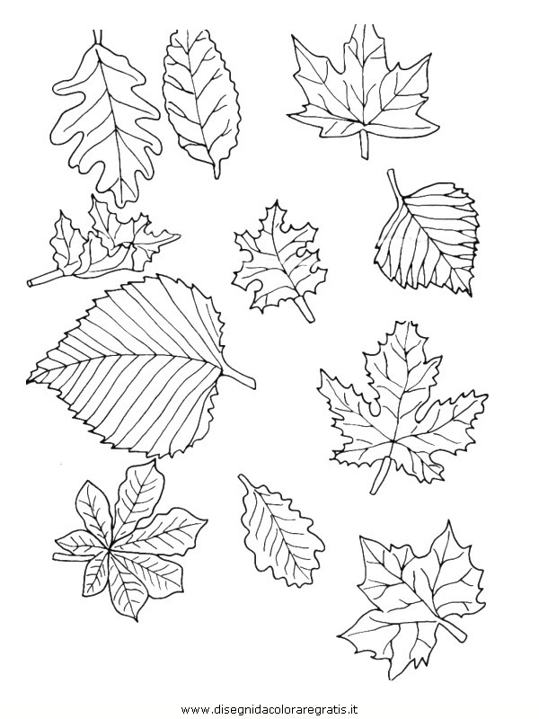 natura/foglie/foglie18.JPG