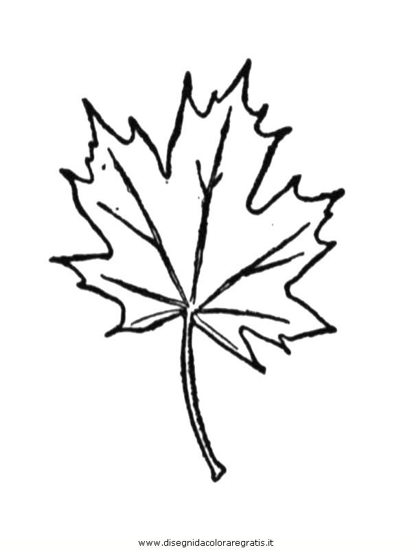 natura/foglie/foglie21.JPG