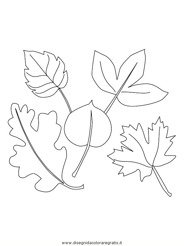 natura/foglie/foglie22.JPG