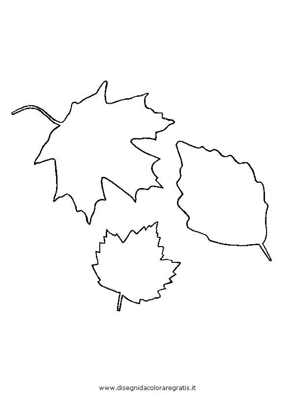 natura/foglie/foglie24.JPG