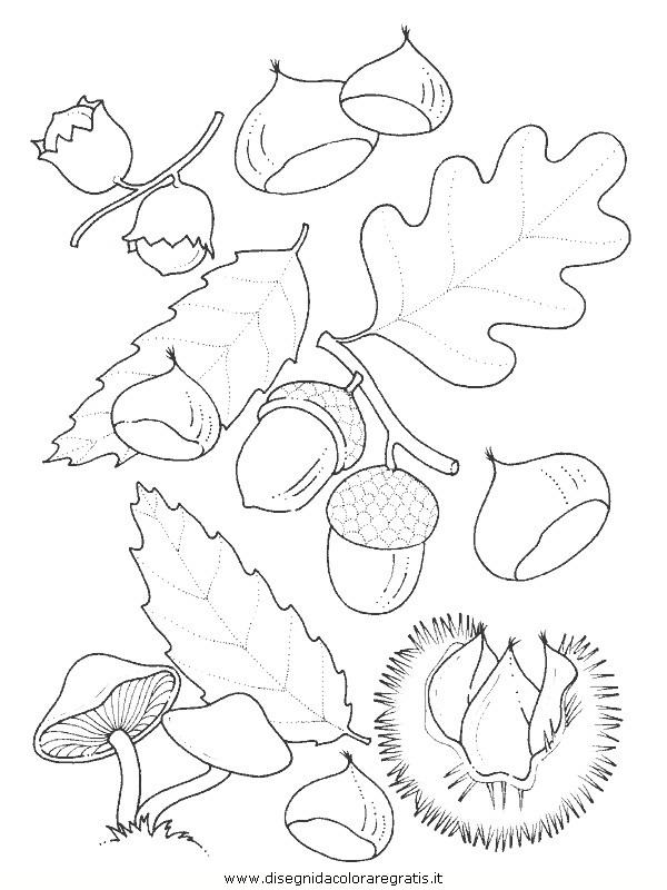natura/foglie/foglie26.JPG