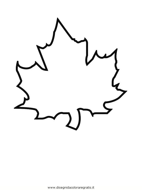 natura/foglie/foglie29.JPG