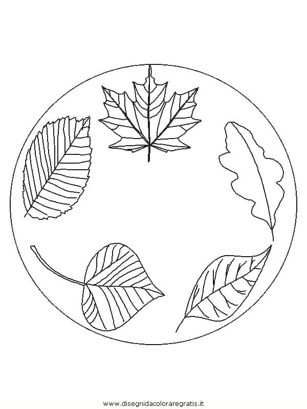 natura/foglie/foglie31.JPG