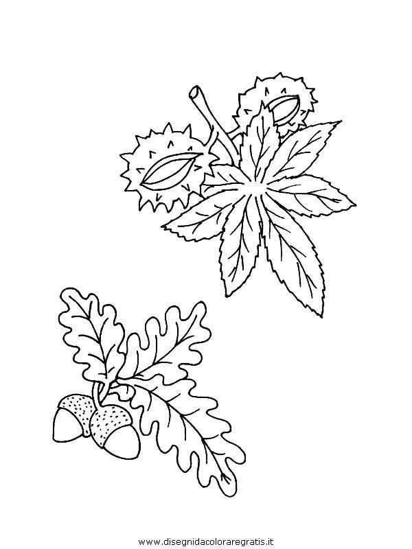natura/foglie/foglie32.JPG