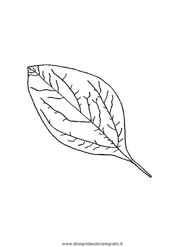 natura/foglie/foglie35.JPG