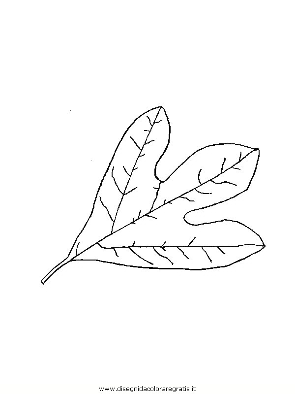 natura/foglie/foglie37.JPG