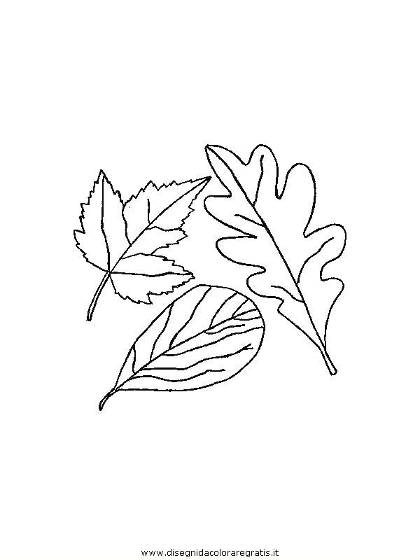 natura/foglie/foglie38.JPG