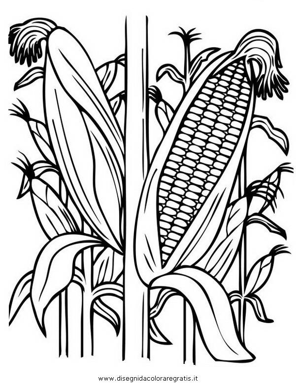 Disegno granturco grano turco categoria natura da colorare