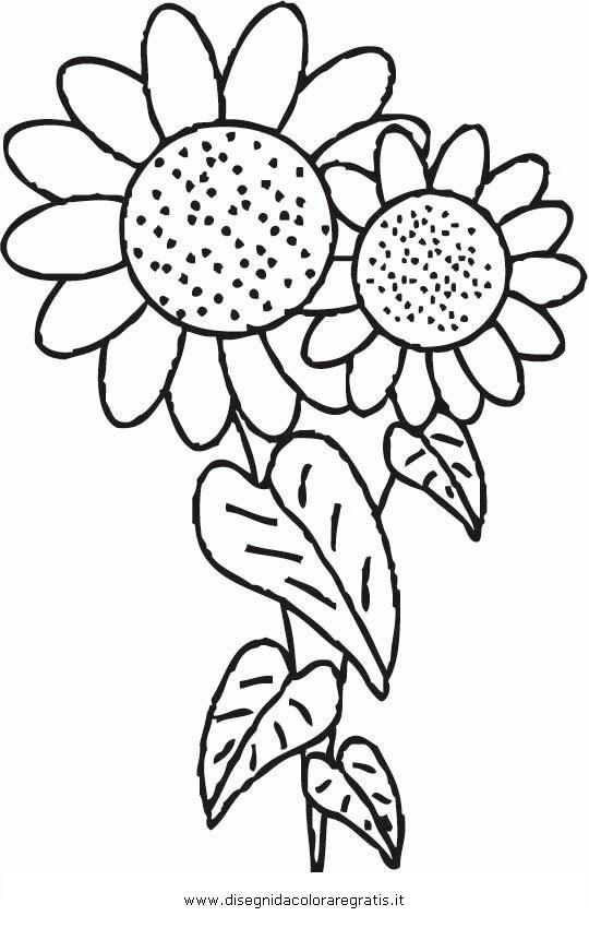 disegni da colorare fiori girasole