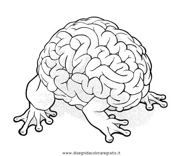 persone/corpo_umano/cervello.JPG