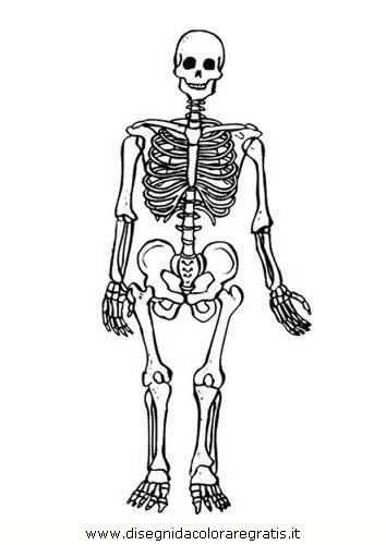 persone/corpo_umano/corpo_umano_33.JPG