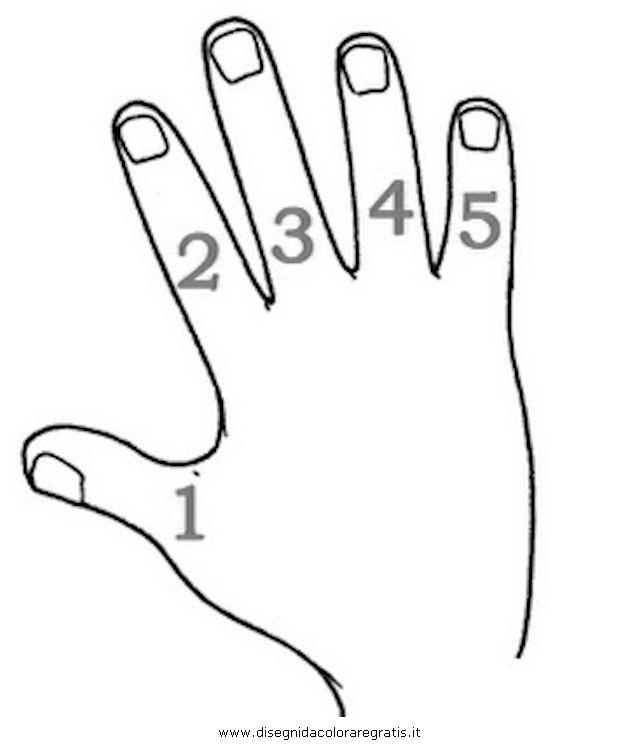 persone/corpo_umano/dita.JPG