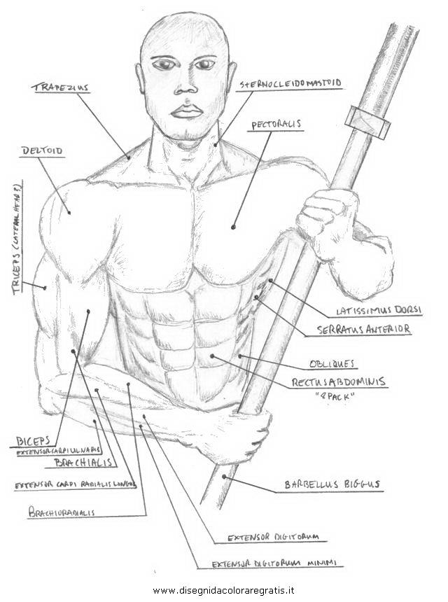 persone/corpo_umano/muscoli_28.JPG
