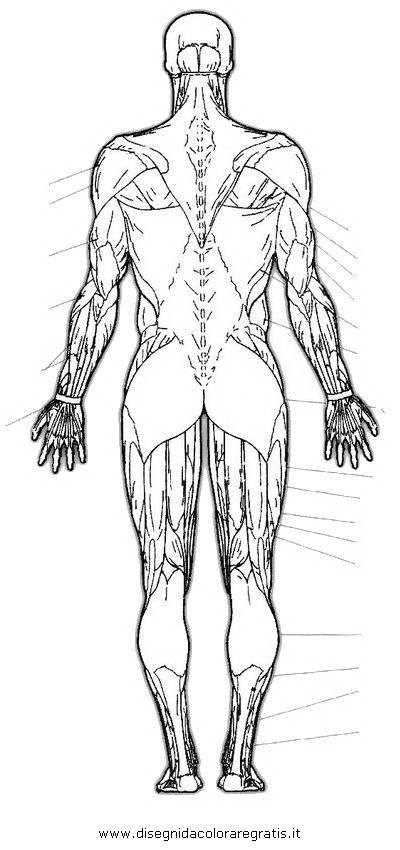 persone/corpo_umano/muscoli_39.JPG