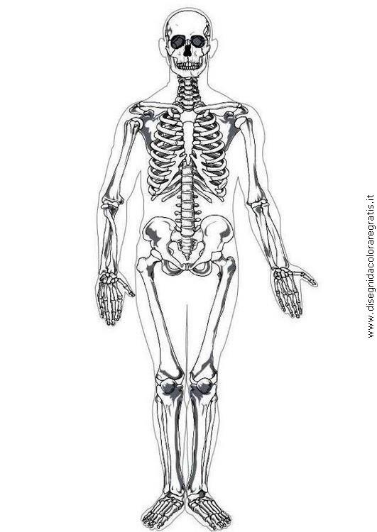persone/personemiste/scheletro_ossa.jpg