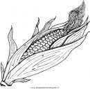 alimenti/verdura/corn_pannocchia.JPG