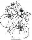 alimenti/verdura/tomatoes_pomodori.JPG