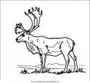animali/animalimisti/alce33.JPG