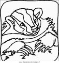 animali/animalimisti/animali_misti_075.JPG