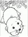 animali/animalimisti/animali_misti_199.JPG