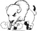 animali/animalimisti/bisonte_bisonti_34.JPG