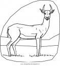 animali/animalimisti/gazzella_04.JPG