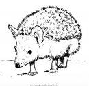 animali/animalimisti/riccio_4.JPG