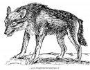 animali/animalimisti/sciacallo_02.JPG