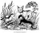 animali/animalimisti/sciacallo_05.JPG