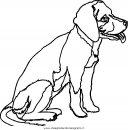 animali/cani/cane_079.JPG