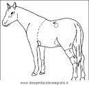 animali/cavalli/cavallo_08.JPG