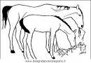 animali/cavalli/cavallo_09.JPG