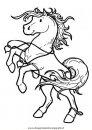 animali/cavalli/cavallo_099.JPG