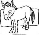 animali/cavalli/cavallo_39.JPG