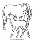 animali/cavalli/cavallo_40.JPG