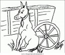 animali/cavalli/cavallo_41.JPG