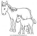 animali/cavalli/cavallo_54.JPG