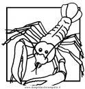 animali/crostacei/aragosta_aragoste_02.JPG
