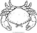 animali/crostacei/granchio_granchi_02.JPG