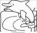 animali/delfini/delfino_delfini_29.JPG