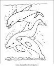 animali/delfini/delfino_delfini_30.JPG