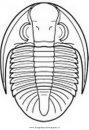 animali/dinosauri/trilobite_bathyuroidea1.JPG