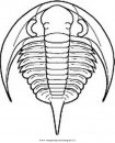 animali/dinosauri/trilobite_bathyuroidea3.JPG