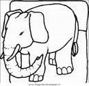 animali/elefanti/elefante_22.JPG