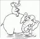 animali/elefanti/elefante_37.JPG