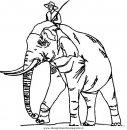 animali/elefanti/elefante_51.JPG