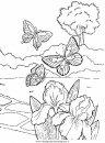 animali/farfalle/farfalla_10.JPG